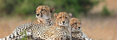 Wildlife Safaris