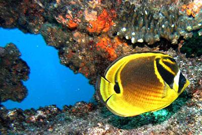 Diving the aliwal shoal
