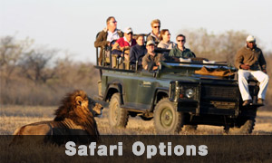 safari-options