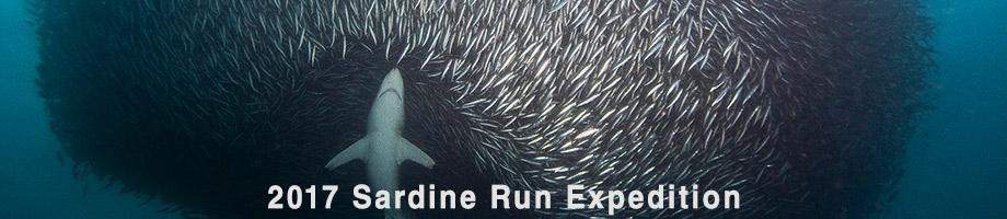sardine_run