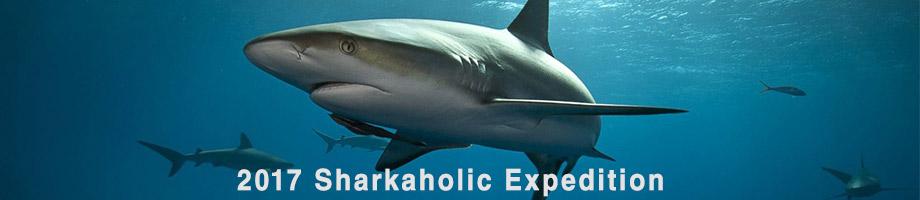 sharkaholic