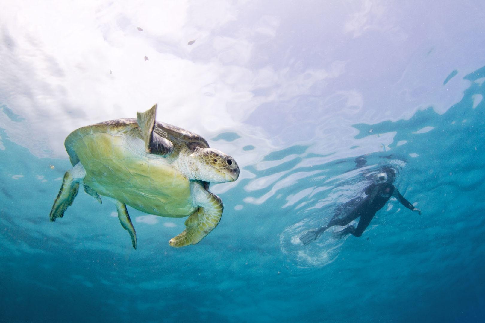 Mozambique dive packages