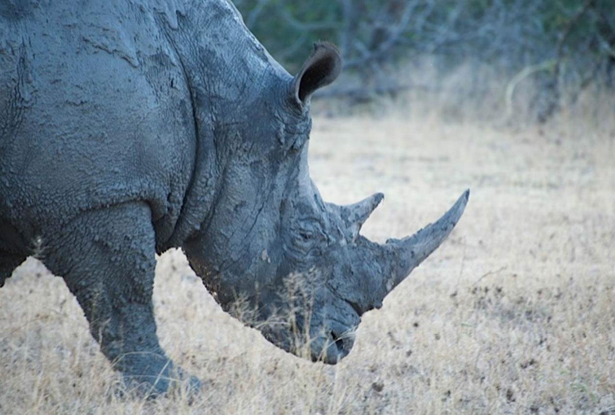 Aliwal Shoal Rhino Post tour