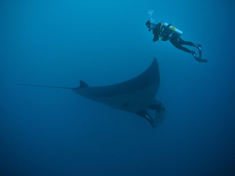 manta ray diving south africa