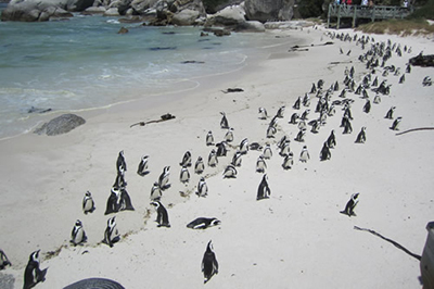 1332848716_w2ssa_boulders-beach-simonstown-where2stay
