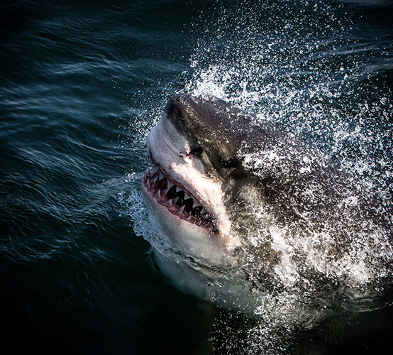 Cost of a 1 day Great White Expedition including transfers from a guest house in Cape Town.