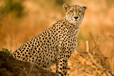 kruger-national-park-main-image_0