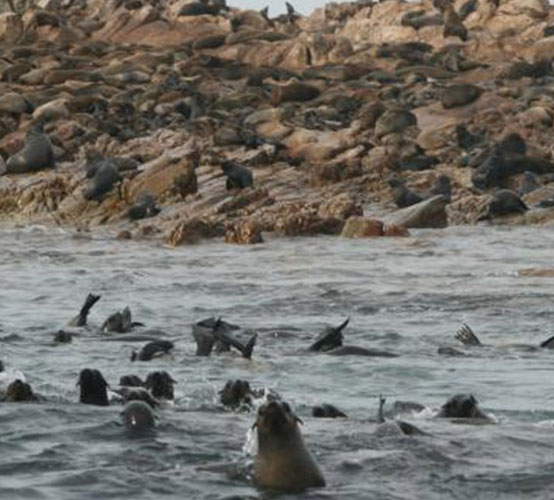 Cost of a 1 day Great White Expedition including transfers from a guest house in Gansbaai.