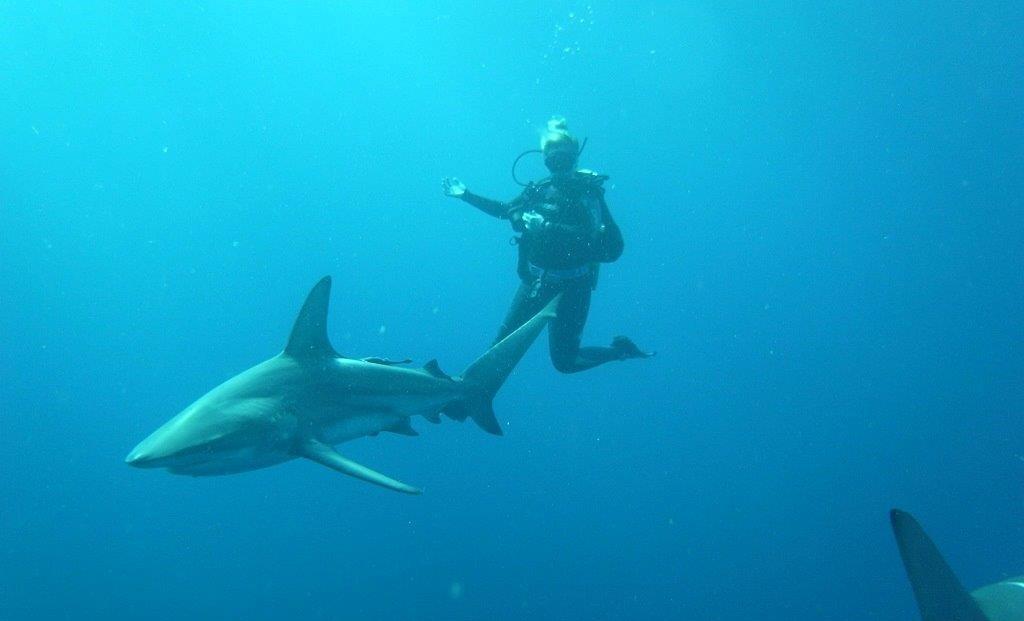 Aliwal Shoal & Protea Banks diving