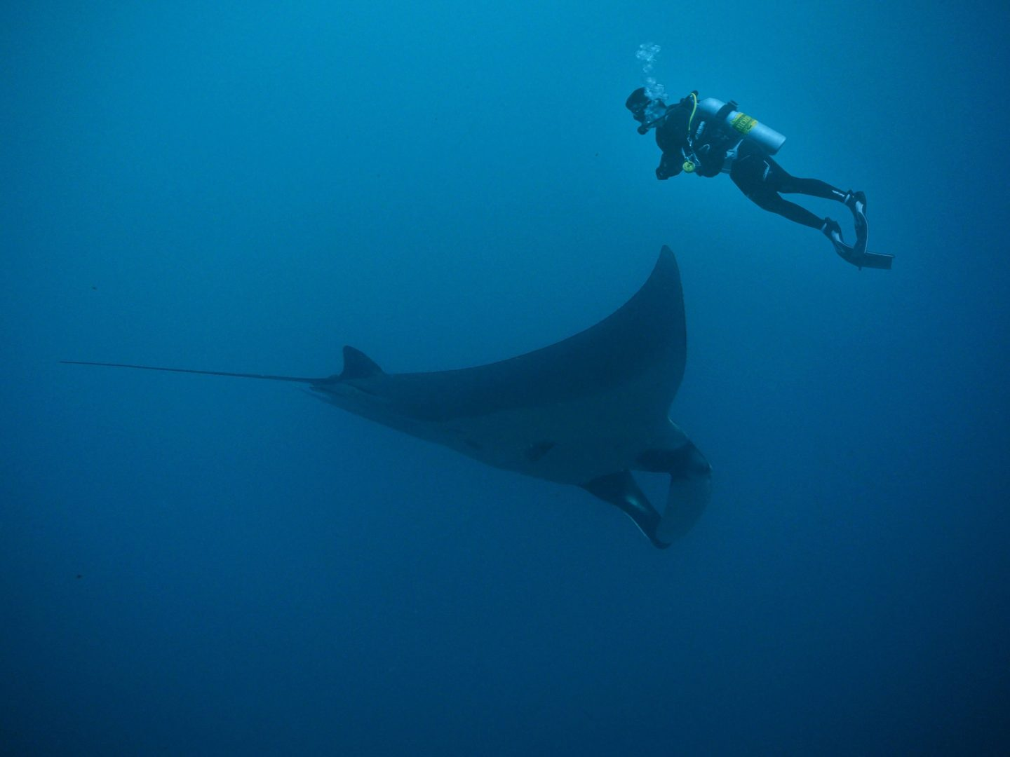 manta ray diving south africa