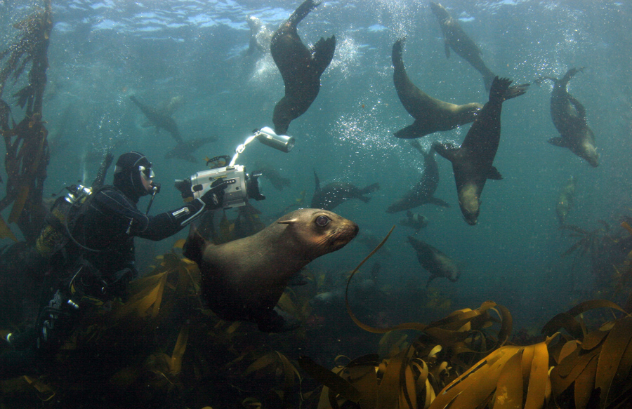 dive with cape fur seals