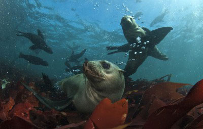 cape seal