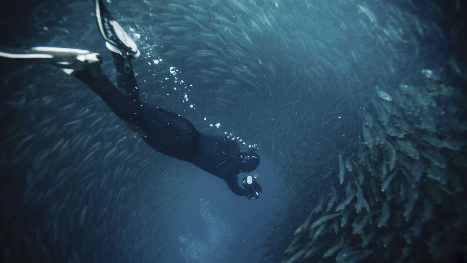 south-africa-sardine-run-diving
